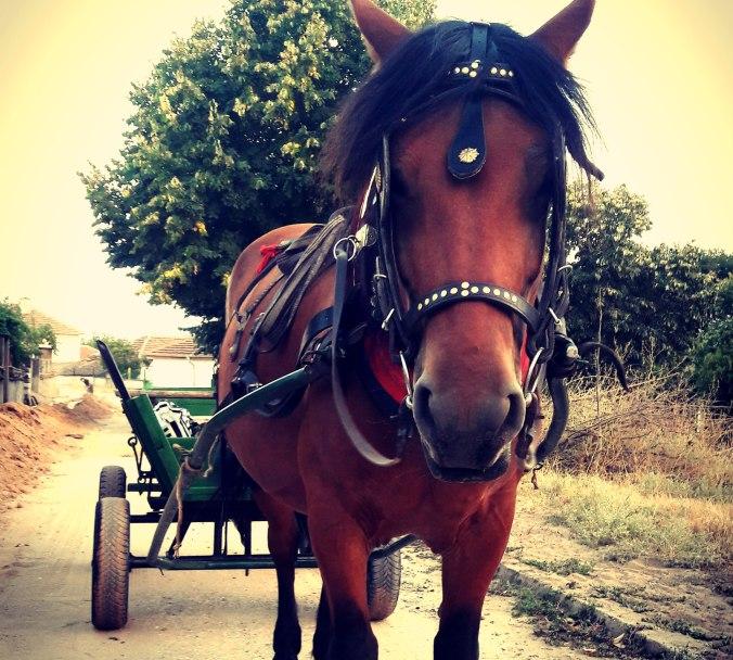 horse riding Bulgaria, horse riding holidays Bulgaria, Bulgarian horse riding holidays, affordable horse riding holidays, 18