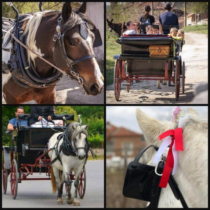 horse riding Bulgaria, horse riding holidays Bulgaria, Bulgarian horse riding holidays, affordable horse riding holidays, 13