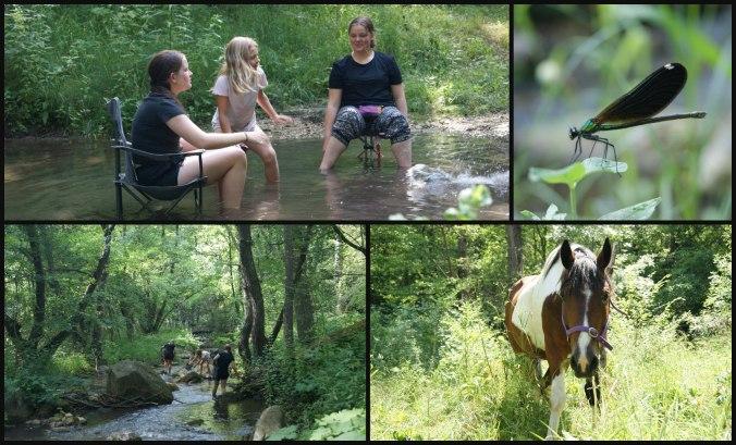picnic collage 2